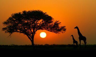 Den afrikanska aktiemarknaden kan vara lönsam men det finns risker…