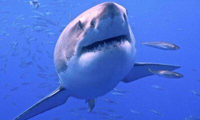 En haj på fondmarknaden