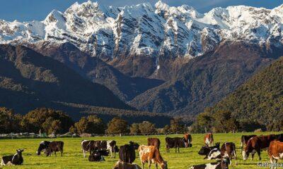 Nya Zeeland, en av de bättre utvecklade marknaderna