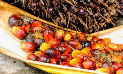 Kina köper 1,7 miljoner ton palmolja från Malaysia