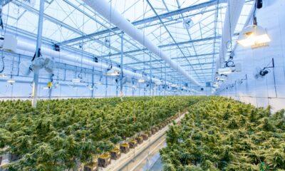 Cannabisfonderna rusar 65 procent på bättre branschförhållanden