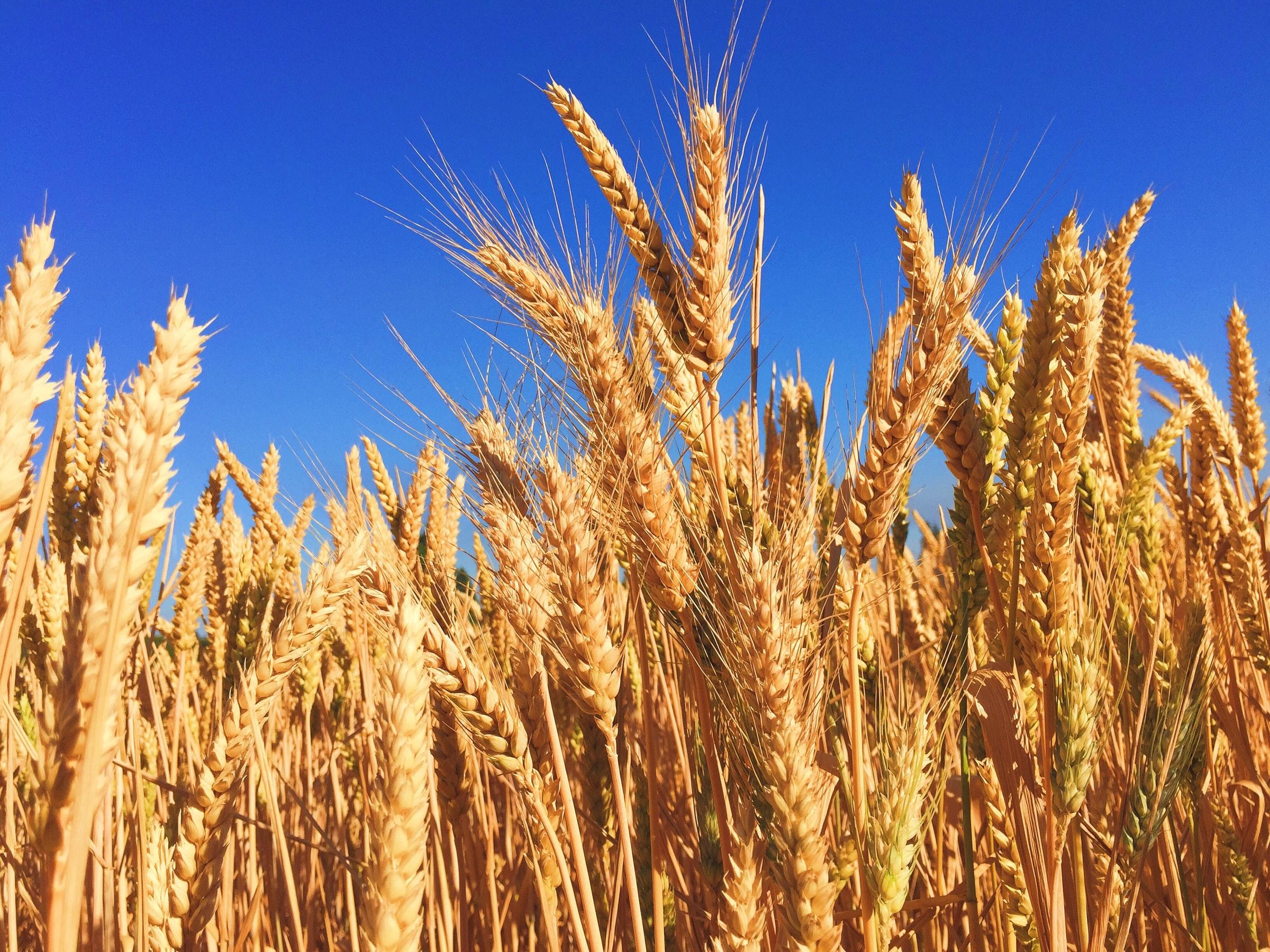 WEAT ETF för den som satsar på jordbrukssektorn