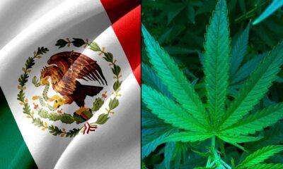 Mexiko röstar om att legalisera marijuana nästa vecka