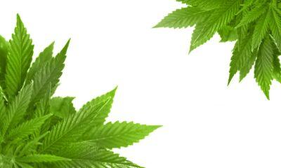 Cannabis-ETF:er drar nytta av lagändringar Lagförslaget syftar till att göra det lättare för banker att ge ekonomiskt stöd till legala cannabisföretag i USA.