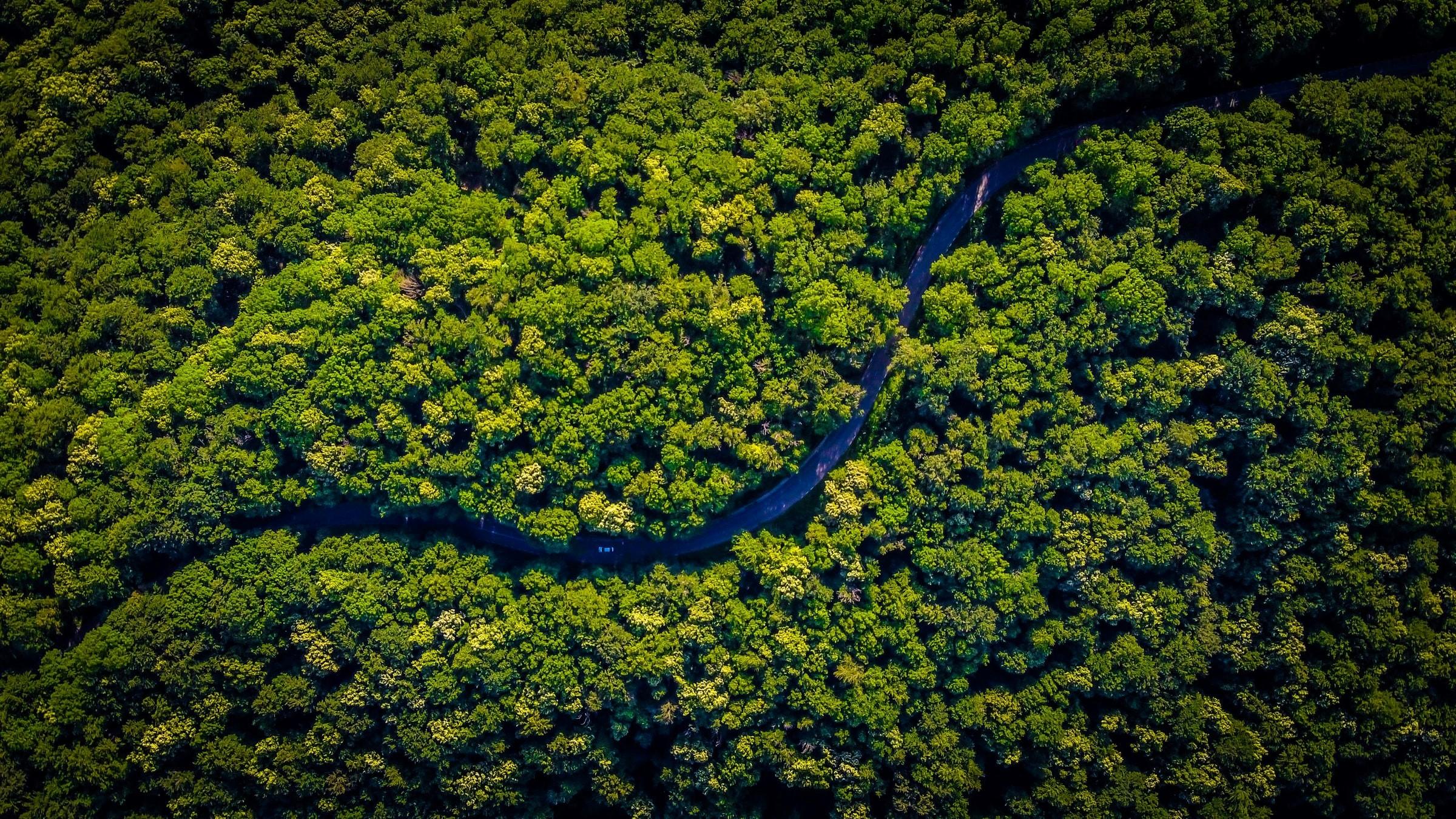 En forskare från University of Cambridge avslöjade att hampagrödor kan fånga koldioxid i atmosfären mer effektivt än skogar, samtidigt som det ger koldioxidnegativa biomaterial.